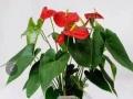 专业从事 花木租摆、绿植租赁、盆景出售 鲜花绿植
