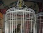 出售精品鸟笼及精品鸟