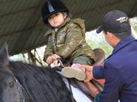 苏州骑马 马术培训 户外运动 马匹服务
