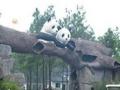 hello kitty主题游乐园+安吉竹博园2日游