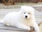 狗场直销各类世界名犬 健康质保 可上店看狗 可视频