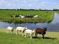 掌中牧场招商 掌中牧场代理 掌中牧场加盟 掌中牧场总部