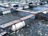 趣养鱼合作品牌-鲜盟食材入选增城区农业龙头企业