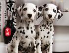 南昌哪里有卖纯种斑点犬的