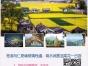 宣城到芜湖马仁奇峰玻璃栈道、响水涧赏油菜花汽车一日
