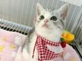 各类猫咪喜欢猫猫的可以私信我,自家繁育,种纯健康价低