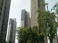 建业桂圆临街旺铺 商业街卖场 200平米