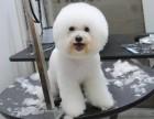深圳锦绣江南晚上24小时营业急诊宠物医院(正规医院)