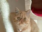 出售家里多只可爱猫咪