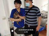 北京尋寵服務,專業尋找丟失寵物