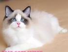 上海自家猫舍家养名幼猫出售,接受电话联系上门看猫,价格可面议