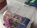 亚克力仓鼠二层豪华别墅一个及便携式鼠笼一个