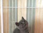 小公蓝猫便宜出啦