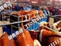 张北肉牛 张北肉牛价格 优质张北肉牛批发/采购
