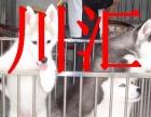 川汇本地哈士奇犬销售,周口可以送货,视频挑选,签协议