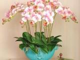 上海室内观叶植物租赁