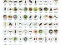 专业杀虫灭鼠,灭四害,蟑螂保灭绝,蚂蚁臭虫