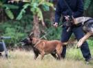 训犬 军犬训练 警犬训练 广州宠物犬训练