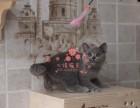 深圳哪里卖蓝猫较便宜多少钱一只 购买包健康多久