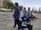 北京森淼犬业是宠物寄养训练的较佳场所