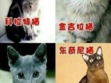 长期出售各种品种猫