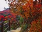 红枫节 九如山瀑布群一日游