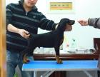 中国较大双血统杜宾犬繁殖基地 可实地考察