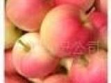 供应优质藤木一苹果 超早熟苹果 水果基地的苹果