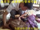 汉阳除虫公司专业灭老鼠灭蟑螂,灭白灭蚁跳蚤臭虫消毒