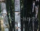 广东省翁源县翁城镇黑皮甘蔗联络点
