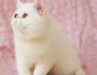 广州加菲猫多少钱一只纯种加菲低价出售加菲猫价格