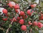 富岗苹果采摘园
