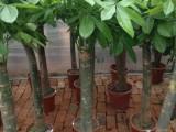 武汉鲜花盆栽三小时送货上门,可定制定时定点定人送达