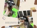 2017年凰霆宠物美容培训学校招生中