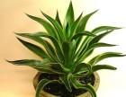 绿植租摆网-办公室绿植租赁平台 绿植租摆 绿植养护
