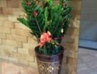 福州专注绿植租赁选爱之伴花艺园花卉租摆发财树金钱树零售绿化