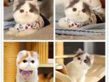 北京哪里可以買寵物貓 可以上門挑選的
