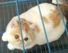 可爱依人加菲猫找新家