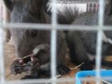 魔王松鼠养殖场