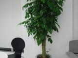 温州瓯海办公室植物租赁花卉租赁