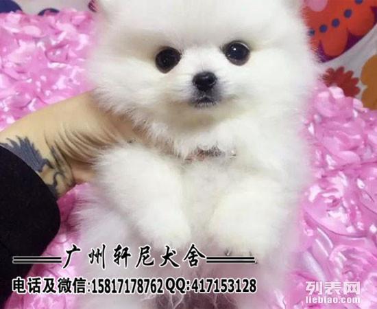 广东正规犬舍直销二十多种世界名犬 出售名犬保纯种