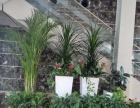 番禺区室内植物摆设 盆栽租摆 园林花木 设计方案