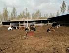 神木县中鸡镇豪赖村养牛场整体出租
