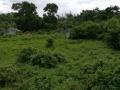 火山口大道现有10亩土地出租