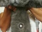 种公一岁保会配猫