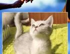 青岛哪个猫舍好青岛哪里卖猫