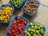 上海滴水湖附近農家樂  采葡萄摘五彩番茄 釣大魚吃土菜