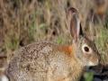 野兔 野兔哪里有卖的