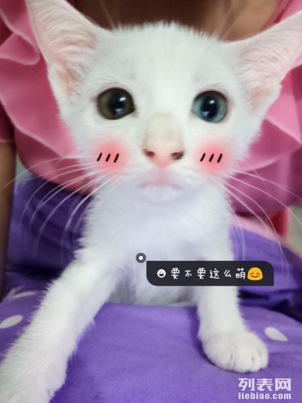 小萌猫可爱图片