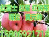 霍林郭勒红富士苹果价格 ,,,,,,24Y